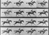 Kronofotoğraflar; 'Duchamp'da Devinimin Statik Halleri', Eadweard MUYBIRDGE'in 187. Doğumgünü Anısına - Özlem Kalkan Erenus yazdı...