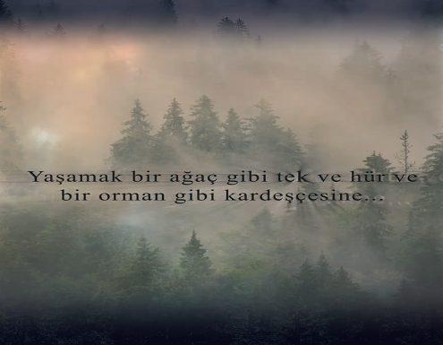 Photo of 'Nazım'ın Ormanı' APP STORE'DA!