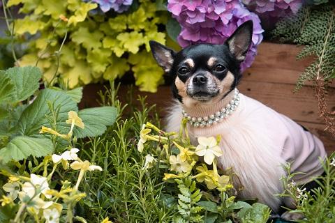 Photo of En güzel kedi ve köpek portreleri için…