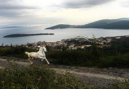"""Photo of Büyükada'daki """"Atlar"""" Ne Olacak?"""