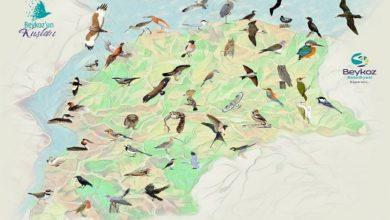 """Photo of """"Beykoz'un Kuşları ve Tabiat Alanları"""""""